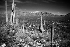 Arizona, Tucson, Saguaro Np, Brown Mountain by James Denk