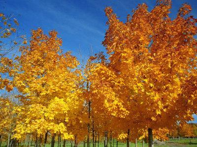 France, Amboise, Foliage