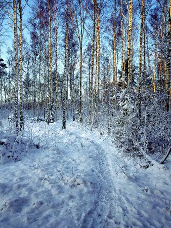 Sweden, Torso, Lake Vanern, Trail