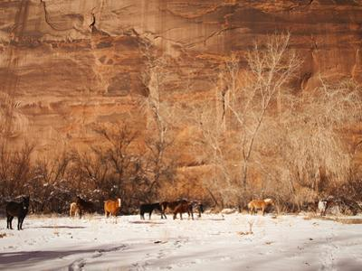 A Herd of Horses in a Snowy Landscape at the Bottom of a Cliff