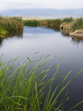 Reeds Growing on the Banks of a River