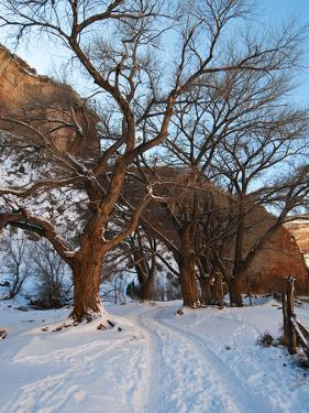 Tire Tracks in Snow Leading Up to Canyon De Chelly Cliffs by James Forte