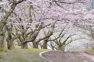 Blossom Hill by James Gordon