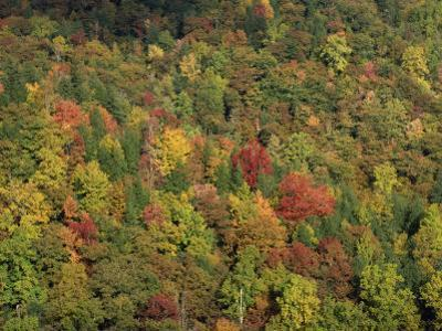 Aerial View over Autumnal Forest Canopy, Near Green Knob, Blue Ridge Parkway, North Carolina, USA