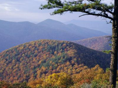 Autumn Forest Landscape Near Loft Mountain, Shenandoah National Park, Virginia, USA
