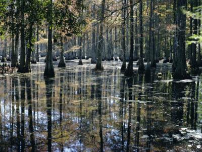 Cypress Swamp, Cypress Gardens, North Charleston, South Carolina, USA