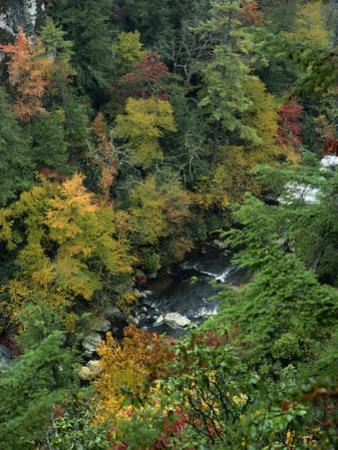 Linville Gorge and Autumnal Forest Canopy, Blue Ridge Parkway, North Carolina, USA