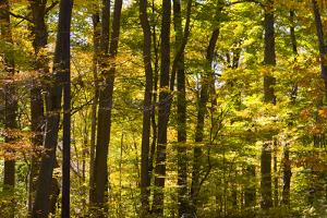 Fall Trees by James Gritz