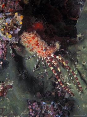 Marine Life, Underwater by James Gritz