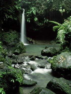 Waterfall Flowing into the Emerald Pool, Dominica, West Indies, Central America by James Gritz