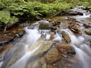 Cascades on Yellow Dog Creek, Coeur D'Alene Nat'l Forest, Idaho Panhandle Nat'l Forests, Idaho, USA by James Hager