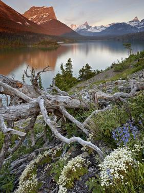 Dusty Star Mountain, St. Mary Lake, and Wildflowers at Dawn, Glacier National Park, Montana, United by James Hager