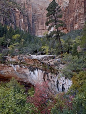 Evergreens, Red Maples, and Red Rock on the Emerald Pools Trail, Zion National Park, Utah, USA by James Hager