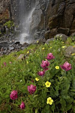 Rosy Paintbrush and Alpine Avens, San Juan Nat'l Forest, Colorado, USA by James Hager