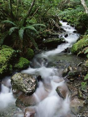 Stream Through Rainforest, Lewis Pass, South Island, New Zealand, Pacific by James Hager