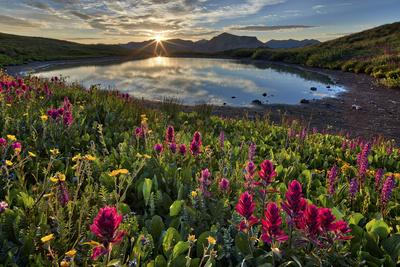 Sunrise over Alpine wildflowers, San Juan National Forest, Colorado, United States of America, Nort