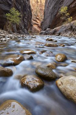 The Narrows of the Virgin River in the Fall by James Hager