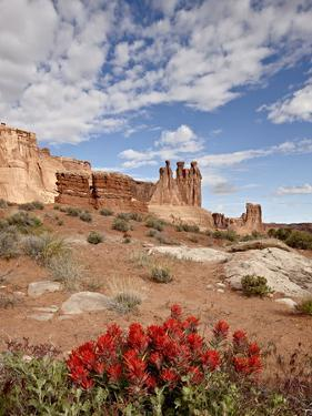 The Three Gossips and Common Paintbrush (Castilleja Chromosa), Arches National Park, Utah, USA by James Hager