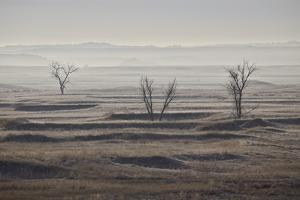 Three Bare Trees on a Hazy Morning, Badlands National Park, South Dakota by James Hager