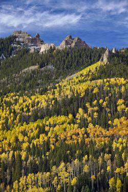 Yellow and Orange Aspens with Evergreens in the Fall by James Hager