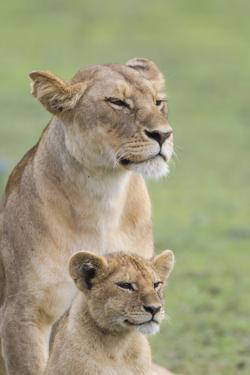 Lioness with its Female Cub, Standing Together, Side by Side by James Heupel