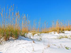 White Sand Dunes along Florida's Gulf Coast by James Kirkikis