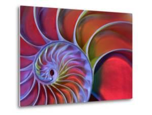 Chambered Nautilus in Colored Light by James L. Amos