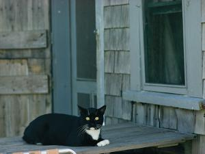 A Cat Sits on a Porch by James L. Stanfield