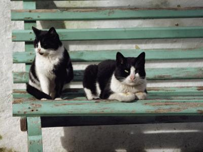 A Pair of Cats on a Bench by James L. Stanfield