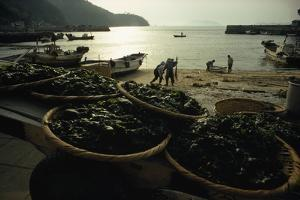 Baskets of Wakame Seaweed Await Processing on a Beach by James L. Stanfield