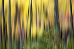 Forest Run II by James McLoughlin