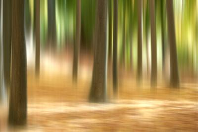 Forest Run III by James McLoughlin