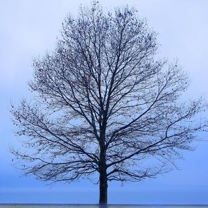 November Tree by James McLoughlin