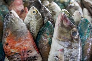 A Collection of Fish for Sale in Kudat Fish Market by James Morgan