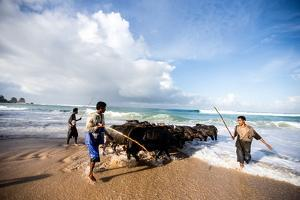 Buffalo Herders on the Beach in Sumba, Indonesia, Southeast Asia, Asia by James Morgan