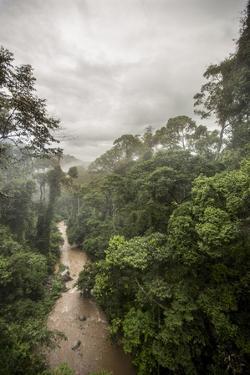 Danum Valley, Sabah, Malaysian Borneo, Malaysia, Southeast Asia, Asia by James Morgan