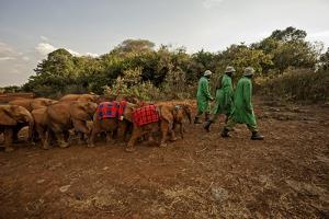 Keepers Lead Elephants by James Morgan