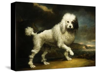 A Standard Poodle in a Coastal Landscape