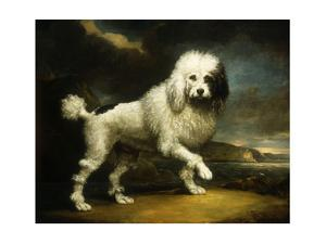 A Standard Poodle in a Coastal Landscape by James Northcote
