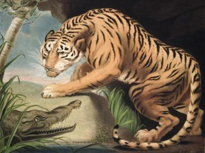 Tiger and Crocodile, Engraved by Charles Turner (1773-1857), Pub. by James Daniell and Co., 1799
