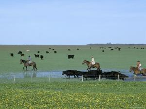 Argentine Gauchos Herd Cattle Through a Field Blooming with Spring Flowers by James P. Blair