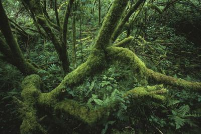 Moss-Covered Branches and Dense Underbrush by James P. Blair