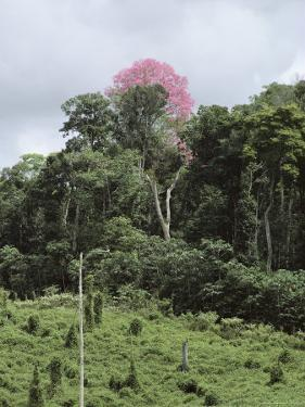 Pastureland Cleared from a Rain Forest near the Rio Gurupi, Brazil by James P. Blair
