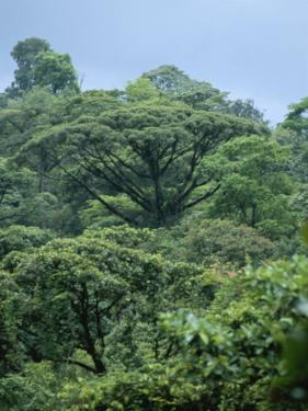 Rain Forest, Costa Rica by James P. Blair