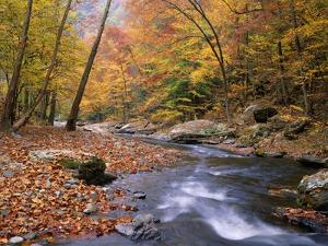 Autumn Color Along River by James Randklev