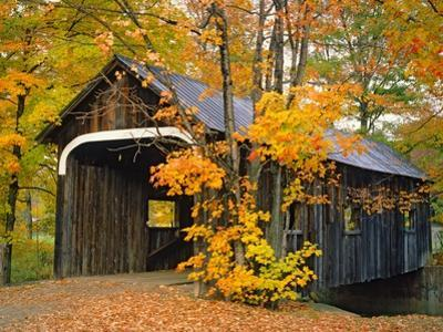 Covered Bridge and Maple Trees