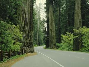 Highway 101 Through Redwoods by James Randklev