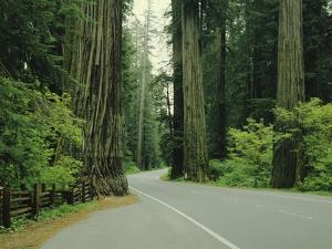 Highway 101 Through Redwoods by James Randklev