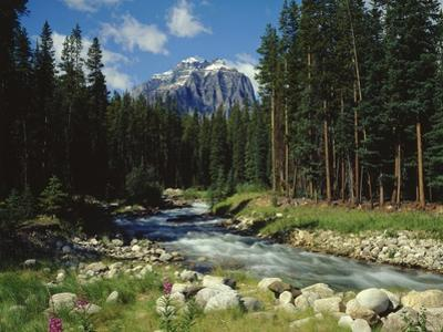 Mountain Stream Cascading over Rocks