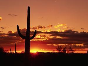 Saguaro at Sunset by James Randklev